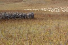 group of sheep in grassland - stock photo