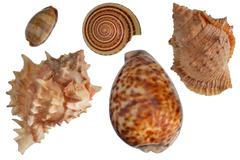 Seashells set - stock photo