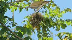 Stock Video Footage of bird nest up in tree top