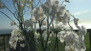 White orchids in front of iron fence Stock Footage