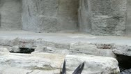 Two fur seals Stock Footage