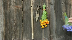 Hanging summer herbs bunch on old wooden wall Stock Footage