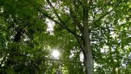 Sun beams in the forest Stock Footage