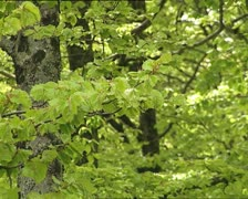 WOODS elm branches - stock footage