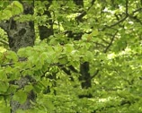 Stock Video Footage of WOODS elm branches