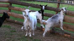 Goat farming Stock Footage