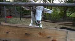 Goat farming Stock Footage