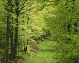 Stock Video Footage of WOODS elms and beeches
