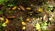 Forest floor with autumn leaves and cones, sunlight and shadows Stock Footage