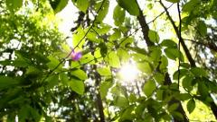 Fresh green leaves in the forest, the sun beams - stock footage