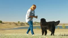 Young Woman Training Newfoundland Dog Outdoor Stock Footage