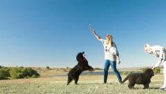 People Enjoying Outdoor With Pets - stock footage
