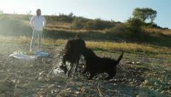 Newfoundland Dog Shaking Stock Footage