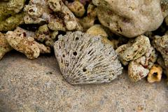 shell on the coastline and beautiful beach of Vietnam. - stock photo