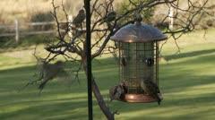 Bird feeder, birdfeeder Stock Footage