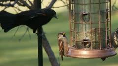 bird feeder, birdfeeder - stock footage