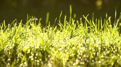 Bright green grass background with dew drops and sunlight, backlit Stock Footage