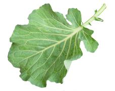 Fresh green cabbage leaf Stock Photos