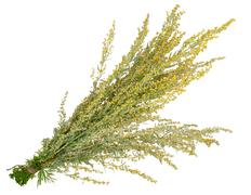 Medicinal plant. sagebrush Stock Photos