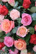 roses in different shades of pink - stock photo