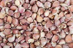 cloves of garlic - stock photo