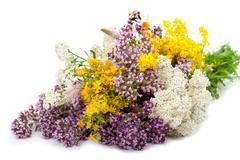 drug plants - stock photo