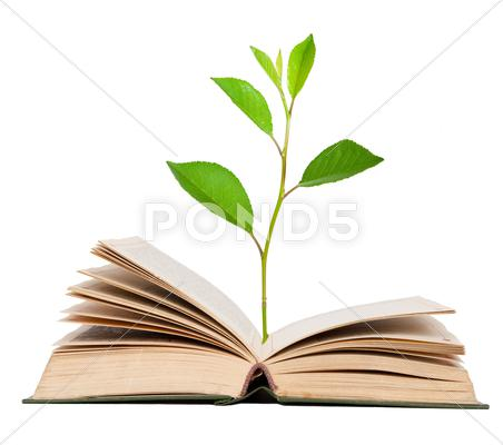 Stock photo of green sprout growing from open book