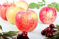 still-life with red-yellow apples and ashberry on white background. - stock photo