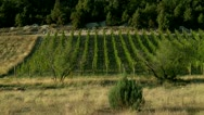 Stock Video Footage of Vineyard in the Mountains (terroir)