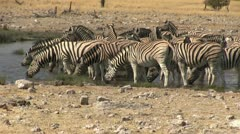 Big zebra herd at waterhole Stock Footage