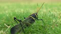 Insect POV Green Grass Stock Footage