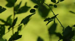 Lake with plants Stock Footage
