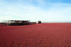 landscape of beach full of red plants - stock photo