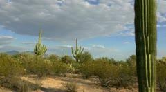 Arizona Saguaro Scenic Time Lapse Stock Footage