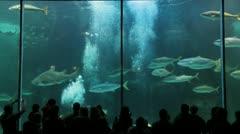 Aquarium - stock footage