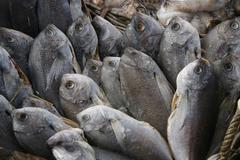 FISH UPRIGHT - stock photo