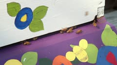Bees leaving colorful hive2 Stock Footage