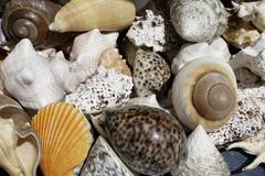 SHELLS.jpg Stock Photos