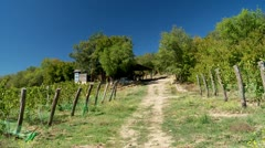 Vineyard in the Mountains (terroir) - stock footage