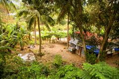 Stock Photo of Tropical forest and cottage at Con Dao island in Vietnam.