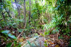 Tropical forest, jungle at Con Dao island in Vietnam. - stock photo