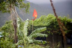 Tropical forest, jungle and communist flag at Con Dao island in Vietnam. - stock photo