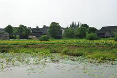 Stock Photo of china village near the sunflower field