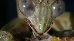 Praying Mantis Extreme Closeup 1920x1080 Stock Footage