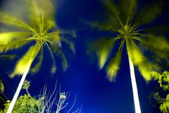 Tropical forest, palm trees at Con Dao island in Vietnam. Stock Photos