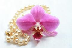 pink orchid and  pearl nacklace - stock photo