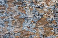 Stock Photo of old tree bark background