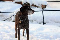 snow pointer - stock photo