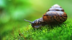 Snail crawls with moss Stock Footage