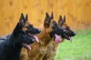 Four dogs Stock Photos